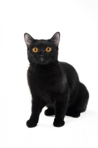Black-Cat2-199x300